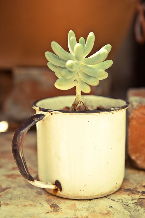 A succulent finds a home in an enamel mug at Monya and Jeremy Eastman's home in the Greenpoint neighborhood of Cape Town, South Africa via Design Sponge