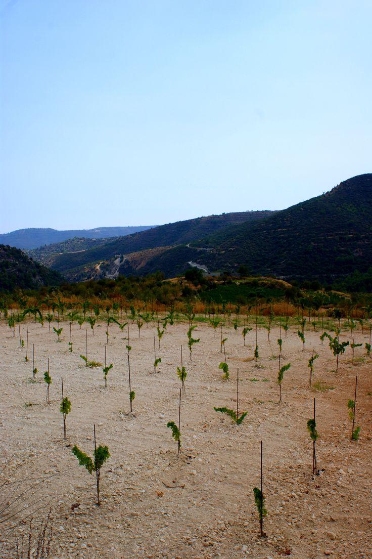 Near Lefkara Cyprus