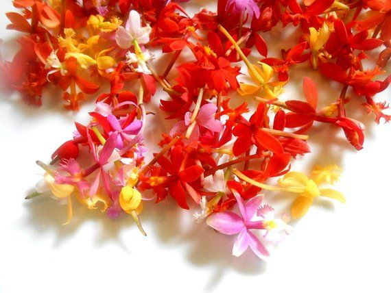 200 Edible Flowers Miniature Orchids Fresh Tiny Orchids Red Pink Orange Yellow Flowers Bulk Orchids Wedding C Edible Flowers Miniature Orchids Orchids
