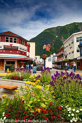 Juneau, Alaska.  Note the vibrant flowers!  Alaska is such a study in extremes!  The vibrant colors are certainly part of it as well as a beautifully glacier capped, verdant mountain.