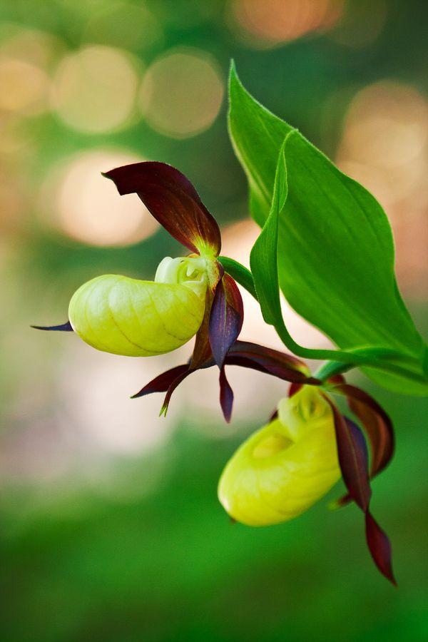 Naše orchidey - Fotoškola | ePhoto.sk - foto, fotografie, fotoaparáty