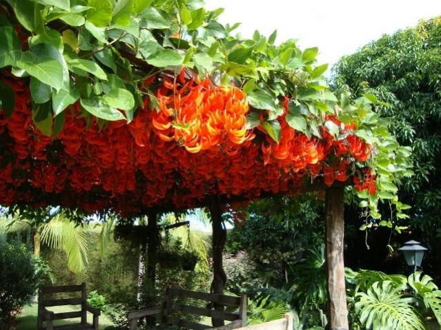 best tropical plants images on, Natural flower