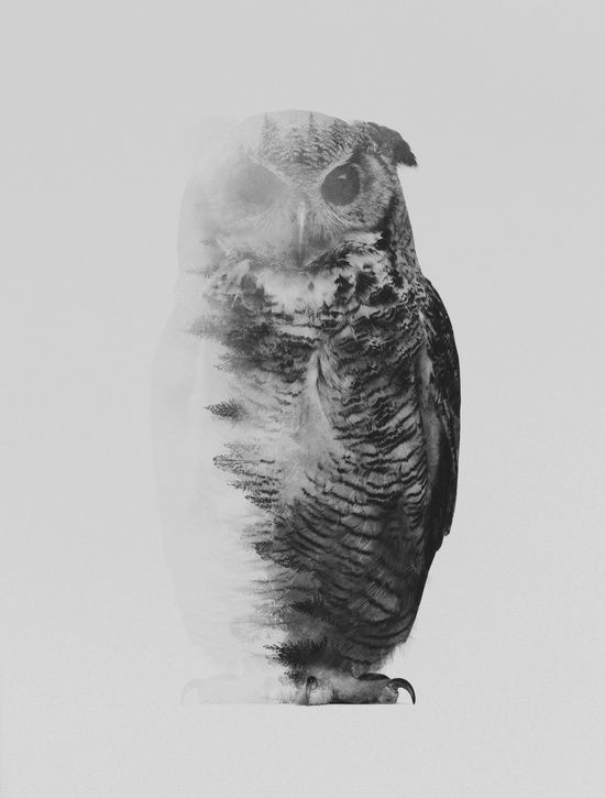 Poster   THE OWL (BLACK & WHITE V von Andreas Lie   more posters at http://moreposter.de