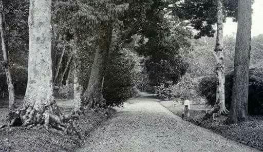Buitenzorg, hoofdweg door de Plantentuin. 1817