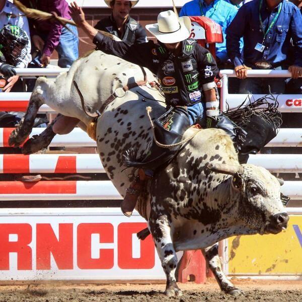 j.b.mauney | my favorite pbr bulls | Bull riding, Rodeo ...