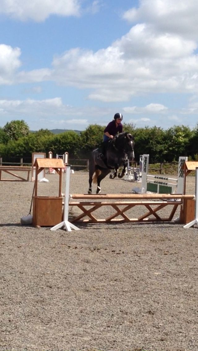 Blackhill Inspired,sourced in Tipperary. Sold through O Brien and Gustafsson stables to Sweden. Showjumped successfully as a 4 yr old in Ireland.