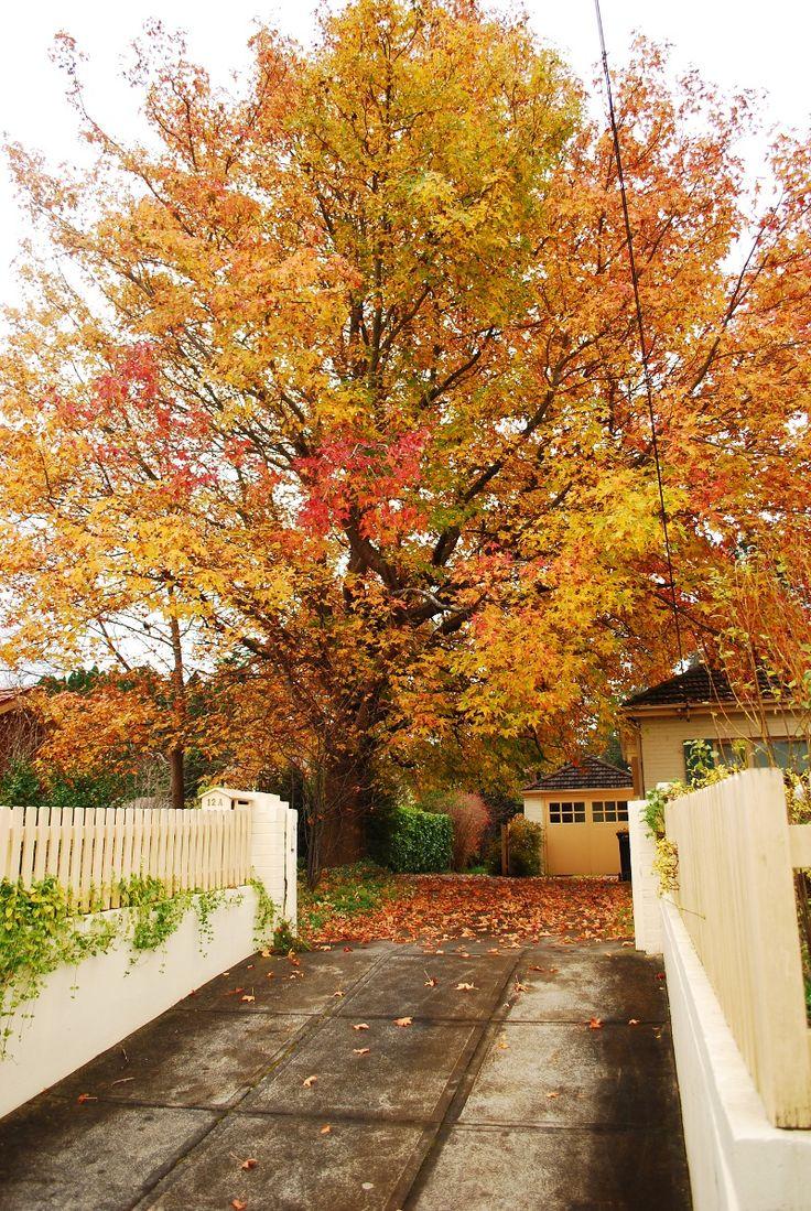 Bowral driveway