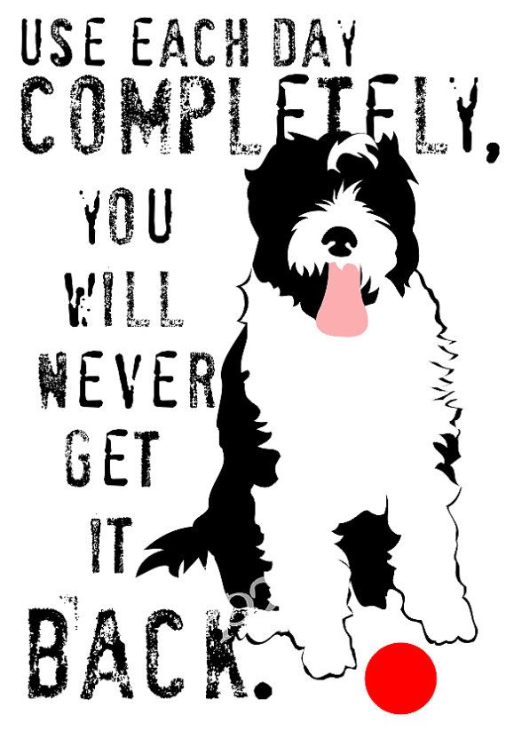 use each day completely, you will never get it back. (portuguese water dog)