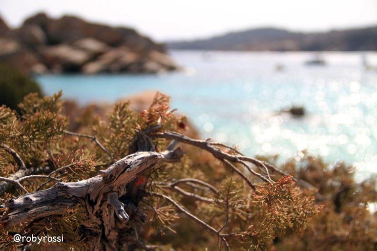 una sfuocata su Cala Coticcio, Isola di Caprera - Gallura