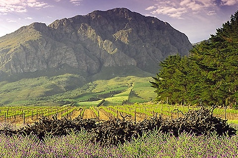 Theuniskraal Wine Estate Tulbagh