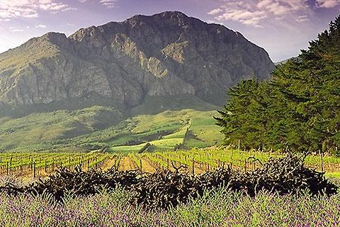 Theuniskraal Wine Estate Tulbagh