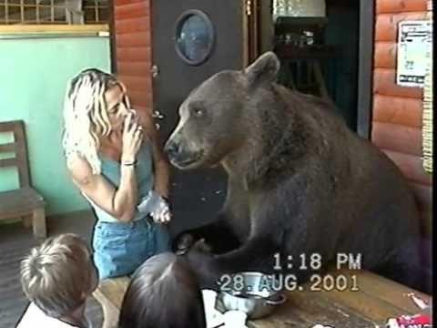 Kenny the Bear - YouTube