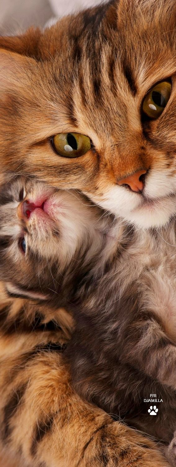 Mother Love