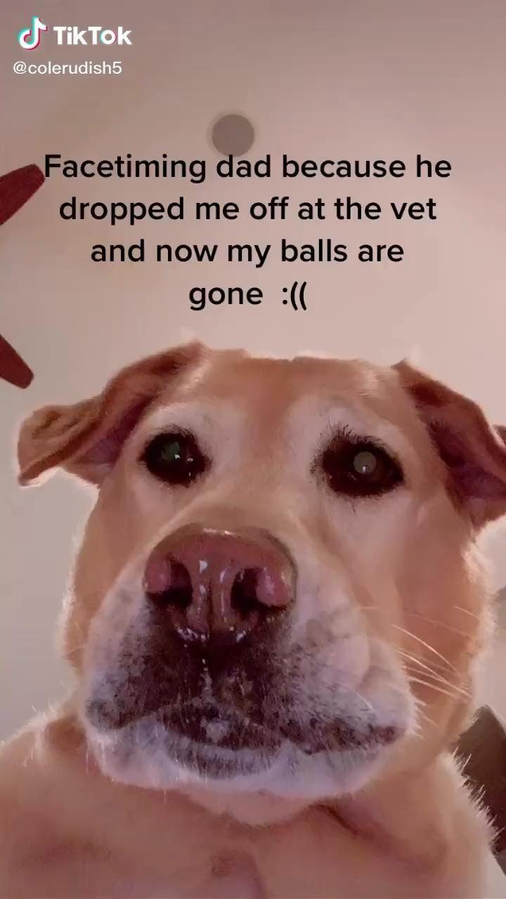 Colerudish On Tiktok Cute Dog Memes Dog Memes Funny Dogs