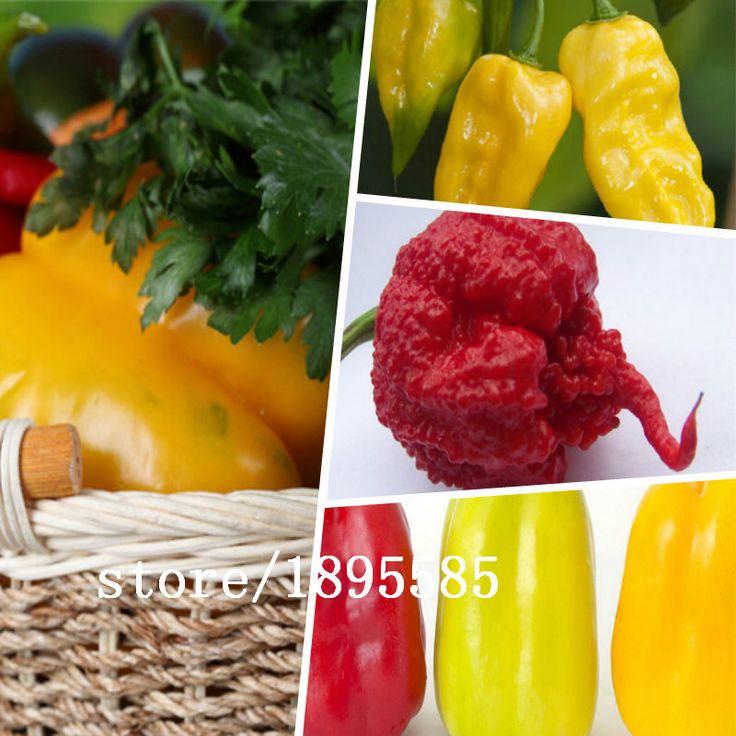 Зеленый перец семена, фонарь зеленый перец, горячие семена перца, семена овощных культур балкон семьи-100 семян/мешок