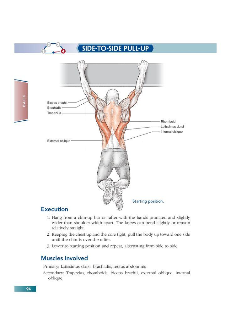 Chapter 6 Back (94)   Bodyweight Strength Training Anatomy   Pinterest