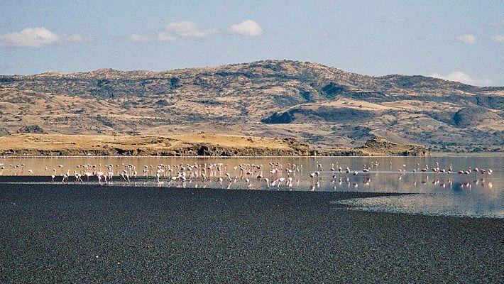 Lacul Natron (Tanzania)
