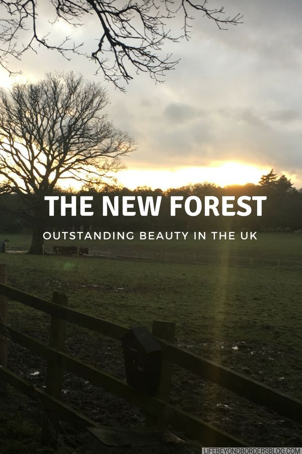 Things To Do In The New Forest Cyclex Experience Pinterest