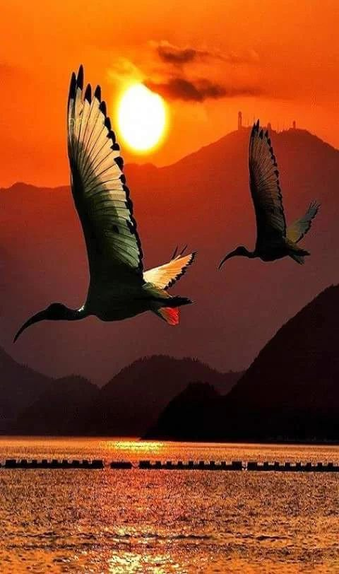 birds take to the skies at sunrise