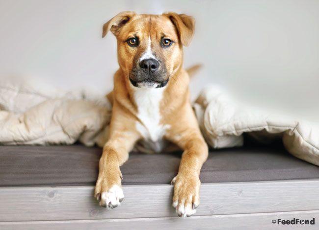 Pitbull German Shepherd Pitbull Mix Puppies Black German Shepherd Dog Black German Shepherd Puppies