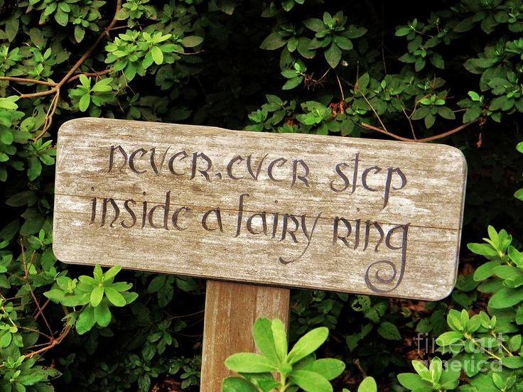 Inside A Fairy Ring Photograph  - Inside A Fairy Ring Fine Art Print