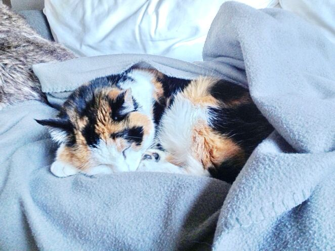 Sleepy cat in winter #cute #love