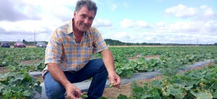 Gilles Leroux, un de nos agriculteurs de cornichons français !
