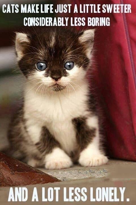Cats Make Life Just A Little Sweeter ... #beautifulcat