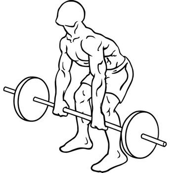 De barbell rear delt row is een oefening voor de spieren in de schouders. Om deze oefening uit te voeren is een stang nodig met daarbij een set schijven. Sta rechtop met de knieën ligt gebogen. Pak de stang beet met een onderhandse greep. Wissel af tussen de smith- en stang versie van de oefening.