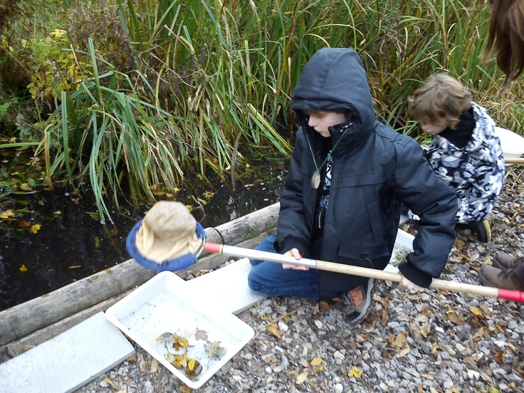 Young explorers make an intrepid journey through the wild landscape of College Lake (Photo: Pond dipping by Jenny Fifield) http://www.bbowt.org.uk/blog/bbowtblog/2013/02/05/young-explorers-make-intrepid-journey-through-wild-landscape-college-lake