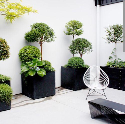 alignement des pots avec des arbustes et buissons de différentes tailles