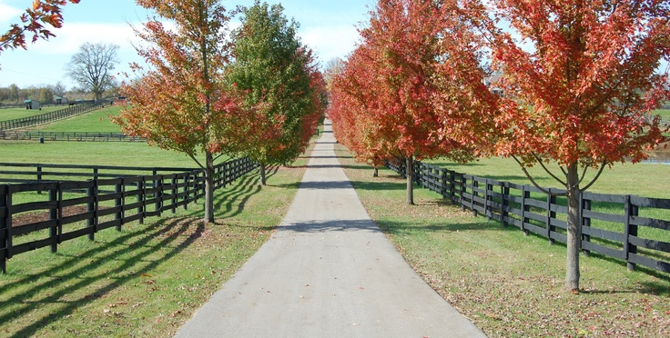 Old Friends Horse Farm ..wonderful place!! Enjoyed every minute there!