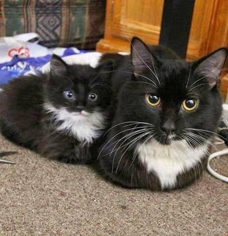 Mini Me! #Katzen #Katzen #Kätzchen   – Kätzchen