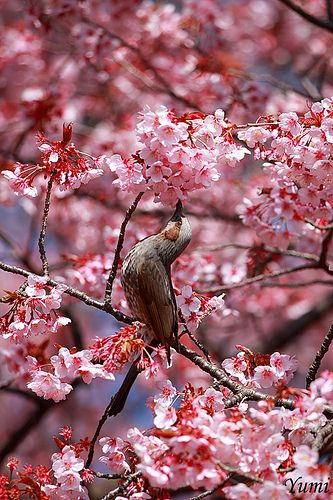 """""""And a bird overhead sang follow, and a bird to the right sang here; and the arch of the leaves was hollow, and the meaning of May was clear."""" ― Algernon Charles Swinburne"""
