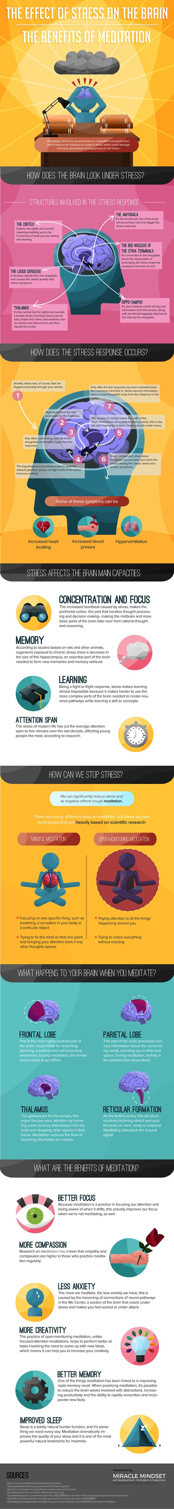 Infographic about the effects of stress on the brain, how does the stress response looks like and what are the main benefits of meditation