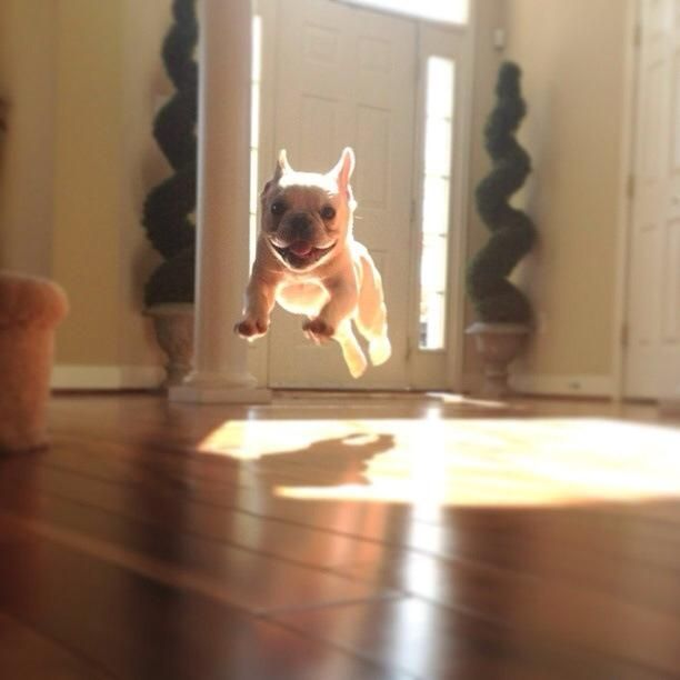 Puppy caught in zero gravity field.