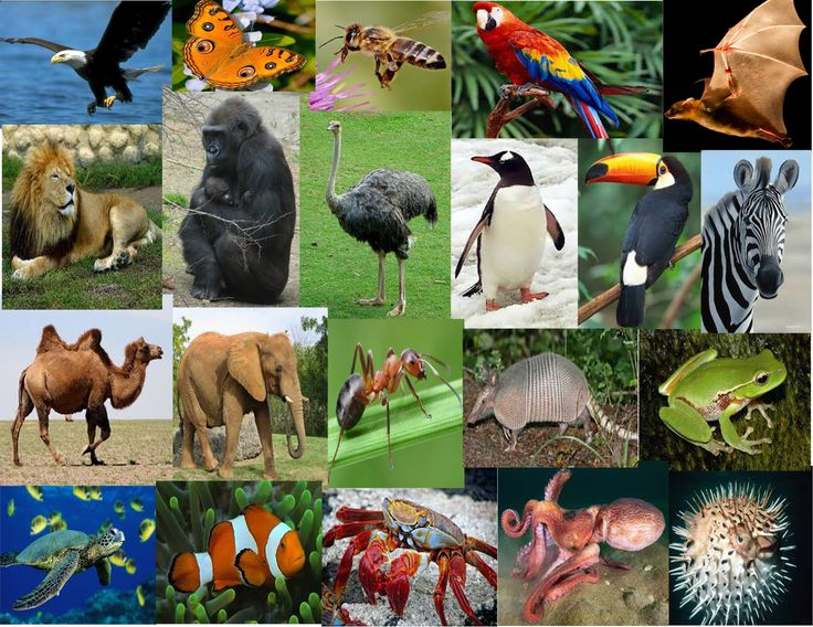 Diversidad animal