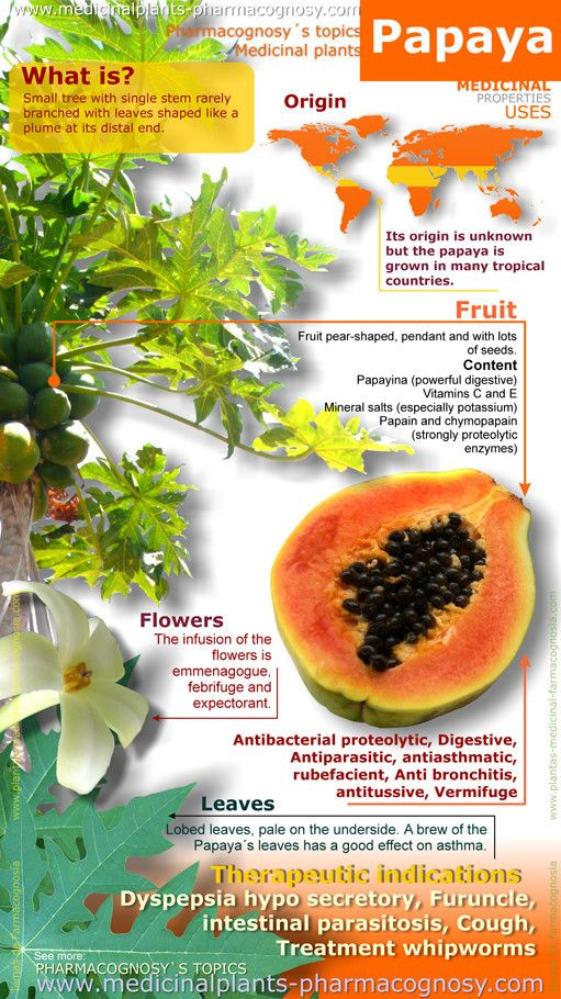 Papaya benefits. Infographic. Summary of the general characteristics of the Papaya. Medicinal properties, Benefits and uses more common. Papaya fruit and leaves contents.