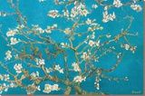 Almond Branches in Bloom, San Remy,