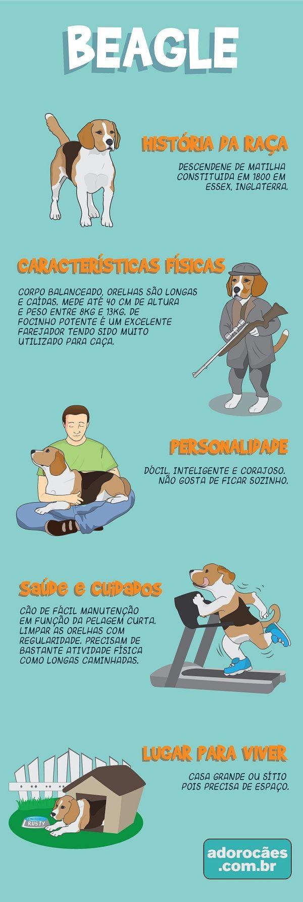 Beagle: história da raça, características físicas, personalidade, temperamento, saúde e cuidados, lugar para viver