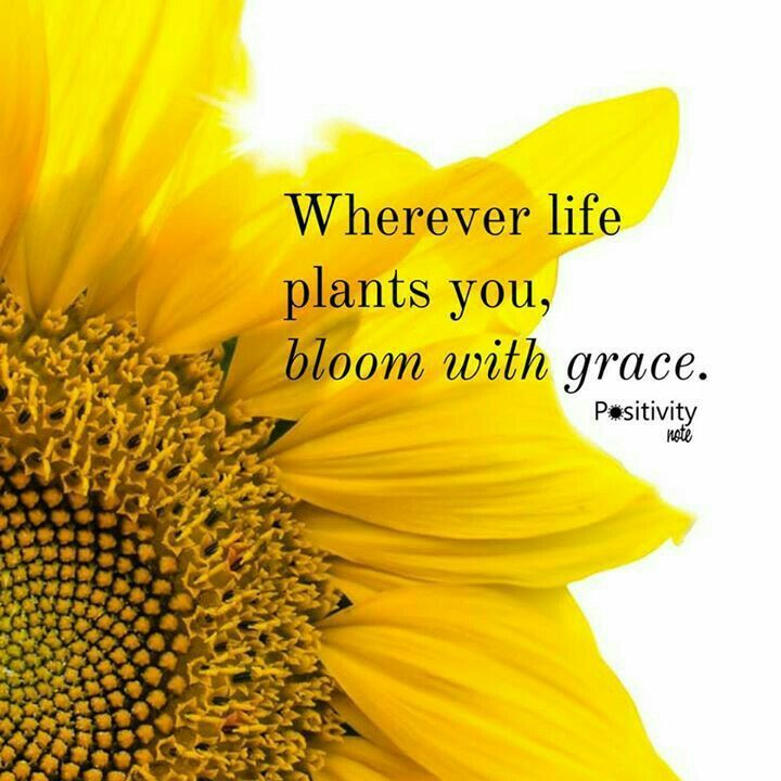 37 Best Flower Quotes Images On Pinterest