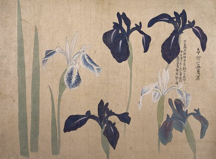 Album-of-Sketches-irises01.jpeg (869×641)Maruyama Ōkyo (1733 – 1795) Edo period, 1793 TYPE: ink and light color on paper DIMENSIONS: 26.5 x 19.4 cm Collection of Tokyo National Museum
