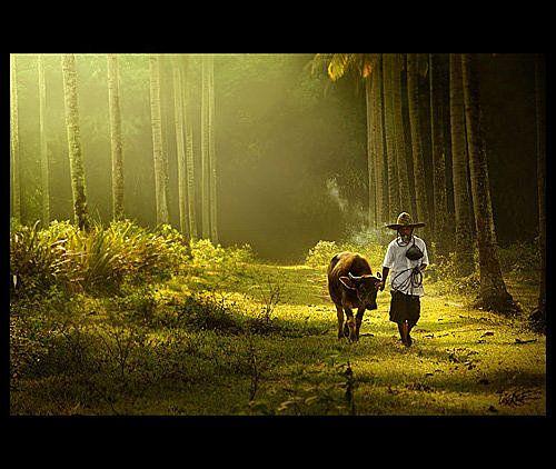 印尼影像:Rarindra Prakarsa 攝影作品 @ 燕青大美女部落格 :: 隨意窩 Xuite日誌