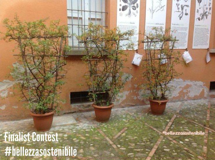 Contest #BellezzaSostenibile 2014! 2° finalist! The author is Paola Valeri!
