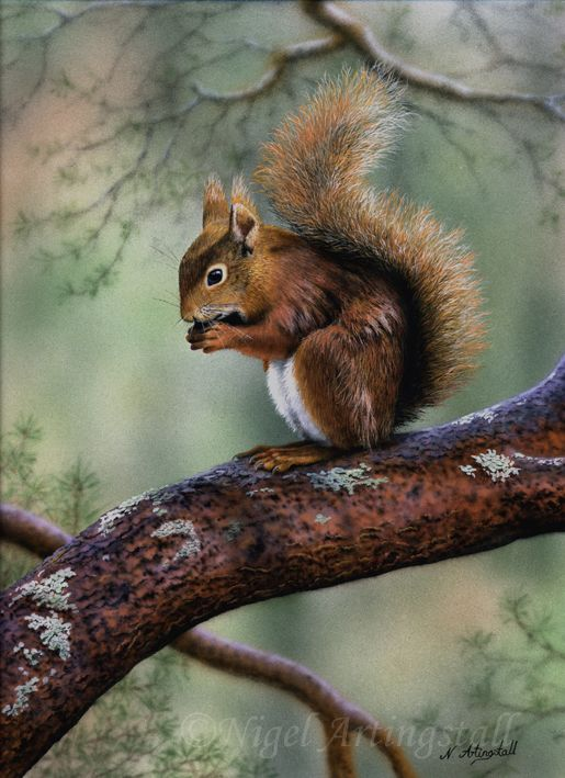 Wildlife Artist-Nigel Artingstall