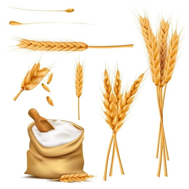 Pshenica Ushi Zerna I Muki V Meshok Vektor Kompleks Pshenica Roj Hlopya Png I Vektor Png Dlya Besplatnoj Zagruzki Wheat Vector Wheat Flour Image