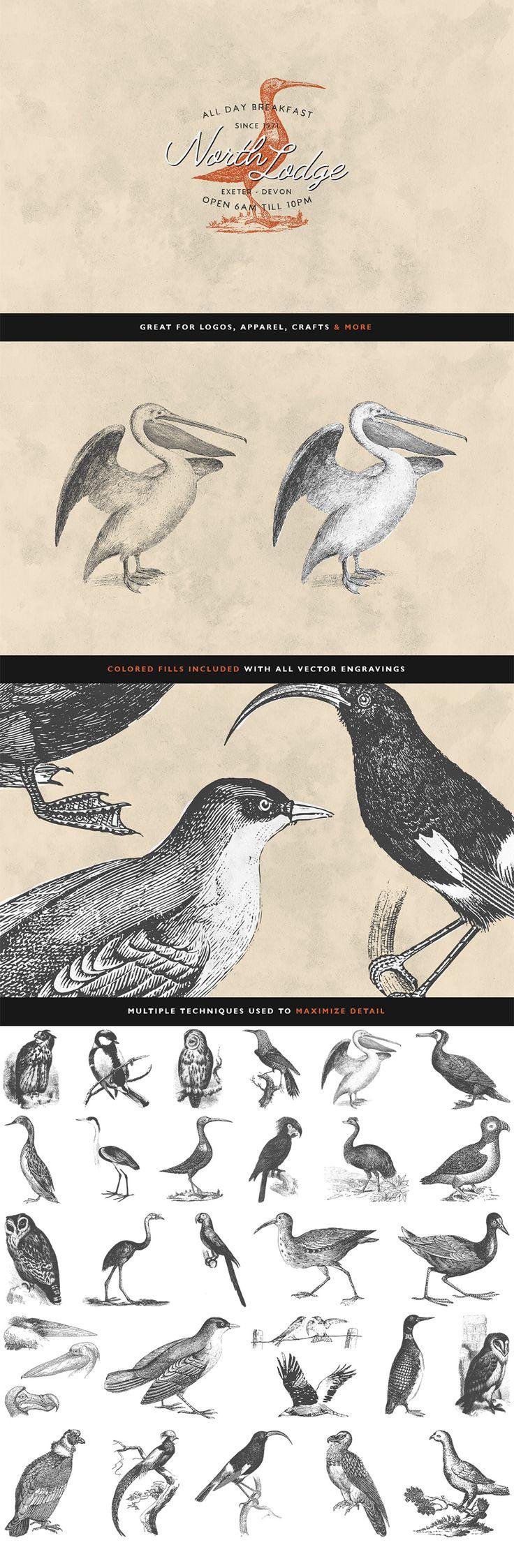 30 Bird Illustrations Volume 2