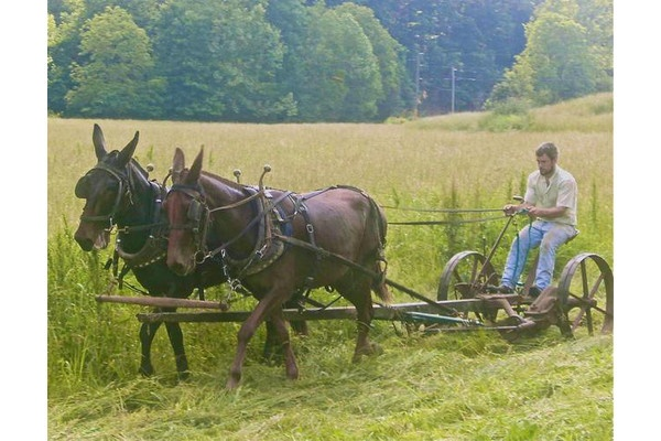 Old School Mower Antique Farm Equip Of Old Horses