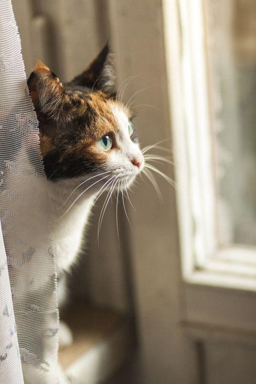 mel-cat: lamp by maevskayayohttp://500px.com/photo/45563836