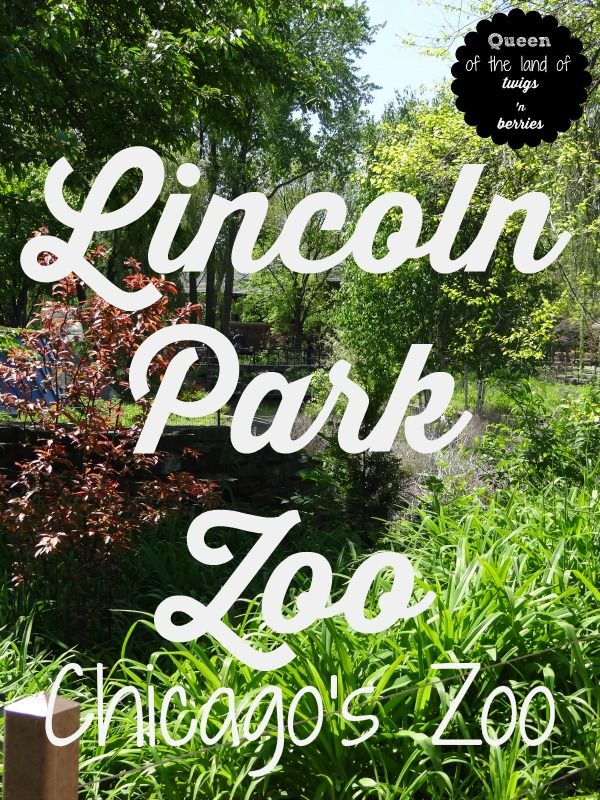 An Insider's Guide to visiting Chicago's FREE Zoo, Lincoln Park Zoo / www.queenofthelandoftwigsnberries.com